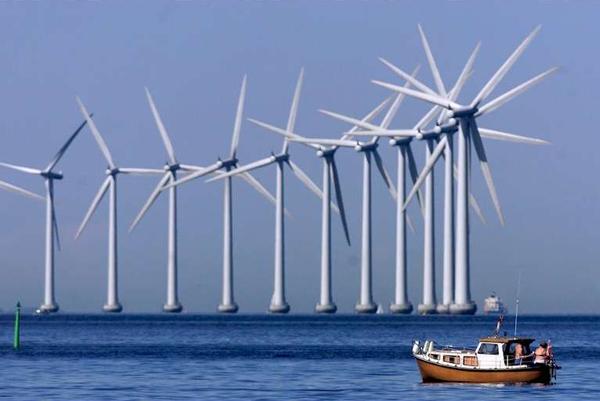 Поновлювані джерела енергії шкодять морській флорі і фауні: в чому взаємозв'язок?