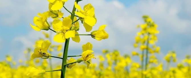 Смазки из растительных масел: голландский стартап Biolube получает субсидию